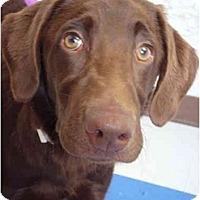 Adopt A Pet :: Belle - Fort Lauderdale, FL