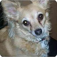 Adopt A Pet :: Snuggles - Johnsburg, IL