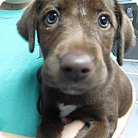 Adopt A Pet :: Maddie(PENDING!) - Chicago, IL