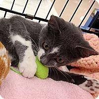 Adopt A Pet :: Gracie - Vero Beach, FL