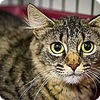 Adopt A Pet :: Flo - Bulverde, TX