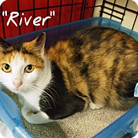 Adopt A Pet :: River - Ocean City, NJ