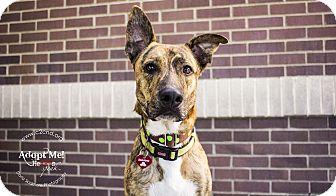 German Shepherd Dog Mix Dog for adoption in Charlotte, North Carolina - Patch