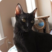 Adopt A Pet :: Lila - Whitehall, PA