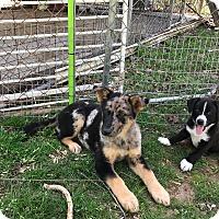 Adopt A Pet :: Diamond - Hohenwald, TN