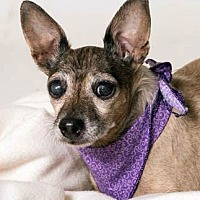 Adopt A Pet :: Destiny - Ventura, CA
