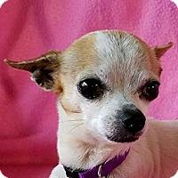 Adopt A Pet :: Nakoma - San Antonio, TX