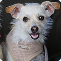 Adopt A Pet :: Pippi - Fillmore, CA