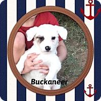 Adopt A Pet :: Bucaneer - DeForest, WI
