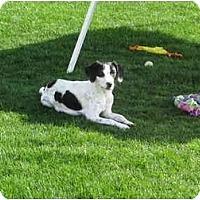 Adopt A Pet :: MARTINA - Scottsdale, AZ