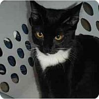 Adopt A Pet :: Indy - Kensington, MD