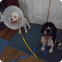 Adopt A Pet :: Johnny/Mason-Adopted! - Kannapolis, NC