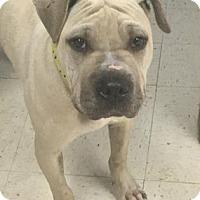 Adopt A Pet :: Duke - Gulfport, MS