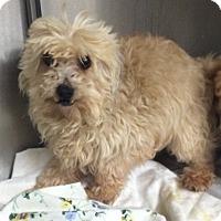 Adopt A Pet :: Kylie - Oak Ridge, NJ