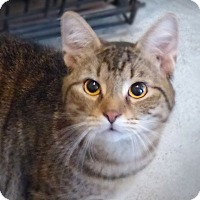 Adopt A Pet :: Sweety - Monterey, VA