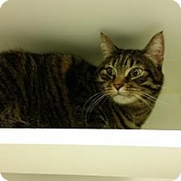 Adopt A Pet :: Giovanni - Reisterstown, MD