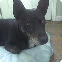 Adopt A Pet :: Kona - Oakley, CA