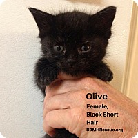 Adopt A Pet :: Olive - Temecula, CA