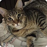 Adopt A Pet :: Princeton - Hendersonville, NC
