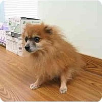 Adopt A Pet :: Buddie - Chesapeake, VA