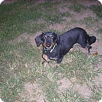 Adopt A Pet :: Riley - Lawndale, NC
