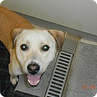Adopt A Pet :: T-BONE - Sandusky, OH