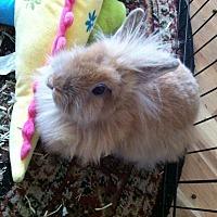 Adopt A Pet :: Nila - Hahira, GA