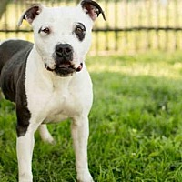 Adopt A Pet :: KLONDIKE - Los Angeles, CA