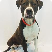 Adopt A Pet :: JoAnn - New Orleans, LA