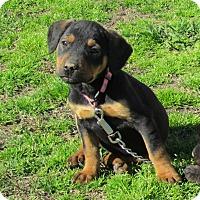 Adopt A Pet :: CISSY - Bedminster, NJ