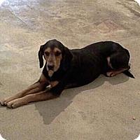 Adopt A Pet :: Jimmy - Schererville, IN