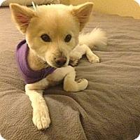 Adopt A Pet :: Admiral - Oceanside, CA