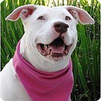 Adopt A Pet :: Bitty - Encinitas, CA