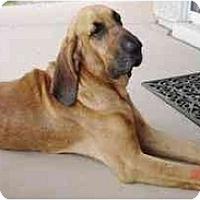 Adopt A Pet :: Pluto - Gilbert, AZ