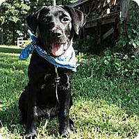 Adopt A Pet :: BO - Plainfield, CT