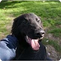 Adopt A Pet :: Huey - Washington, NC