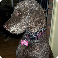 Adopt A Pet :: MURPHY - W. Warwick, RI