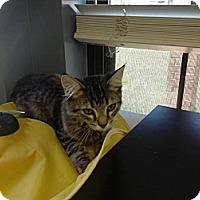 Adopt A Pet :: Fergus - Lake Charles, LA