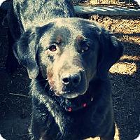 Adopt A Pet :: Smith - Odessa, TX