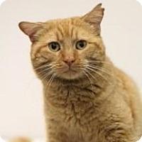 Adopt A Pet :: Tom - Sacramento, CA
