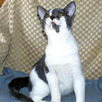 Adopt A Pet :: Lenny - Sunderland, ON