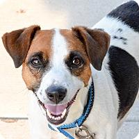 Adopt A Pet :: Lulu - Meridian, ID