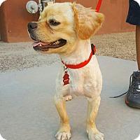Adopt A Pet :: Hammy - Scottsdale, AZ