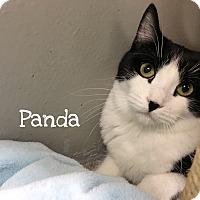 Adopt A Pet :: Panda - Foothill Ranch, CA