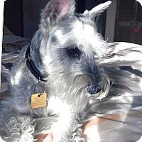 Adopt A Pet :: Sir Winston - Sharonville, OH
