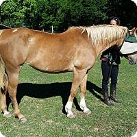 Adopt A Pet :: Faith - Cantonment, FL
