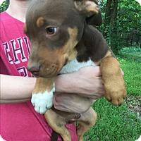 Adopt A Pet :: Dexter - Kittery, ME