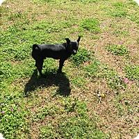 Adopt A Pet :: Romeo - Hampton, VA