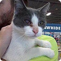 Adopt A Pet :: Jacklyn - West Dundee, IL