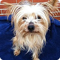 Adopt A Pet :: Bella - Ashland City, TN
